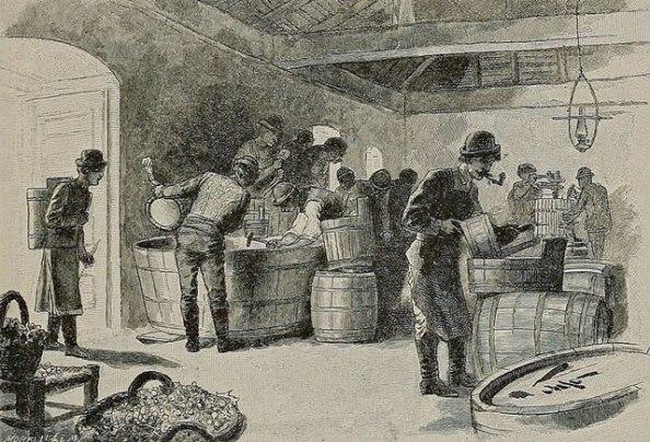 Mustszűrés Tarcalon. Metszet Az Osztrák-Magyar Monarchia írásban és képben című könyvből